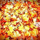 autum leaves by kerrie black