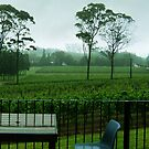 Marsden Estate Winery by cadellin