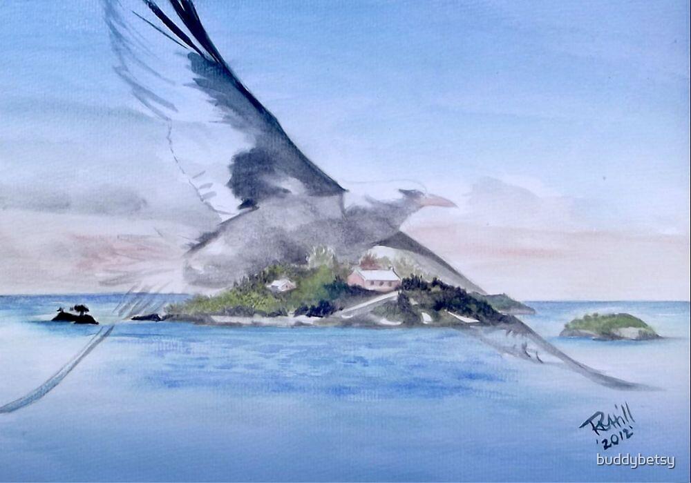 Bermuda longtail by buddybetsy