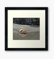 I Want to Go Back Into the Sea Now Framed Print