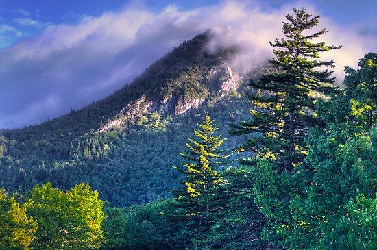 Morning Fog by Jane Best