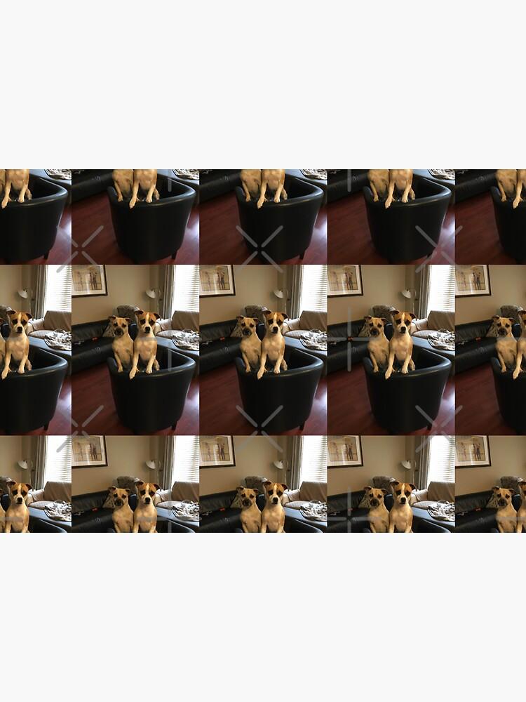 Dogs  by PicsByMi