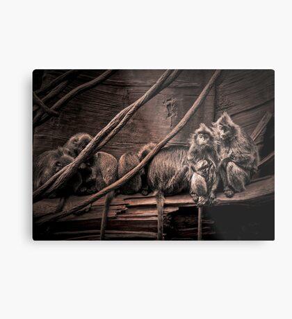 Silver leaf Monkeys in the style of Dorothea Lange Metal Print
