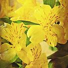 yellow flowers  by agawasa