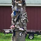 Shoe Tree by cherylc1
