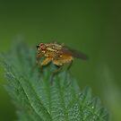 Fly by Matt Sillence