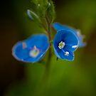Wild Flower by Matt Sillence