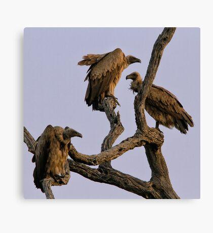 Vulture Trio Canvas Print