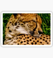 Southern Cheetah (Acinonyx jubatus) Sticker