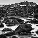 Rock Colony by Paul Moore