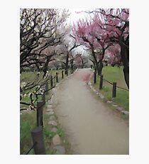 Osaka Blossoms Photographic Print