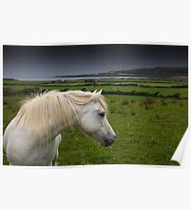 Horse with a view  Poster