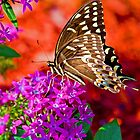Palanedes Swallow Tail Butterfly by TJ Baccari Photography