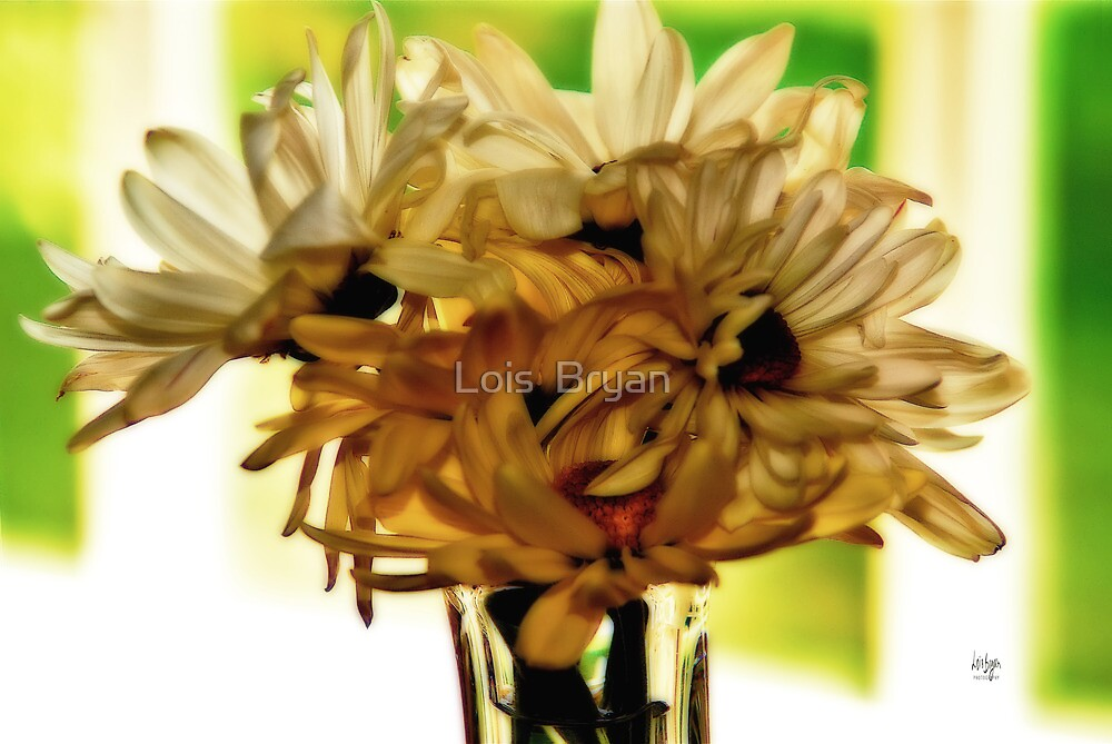 Backlit Daisies by Lois  Bryan