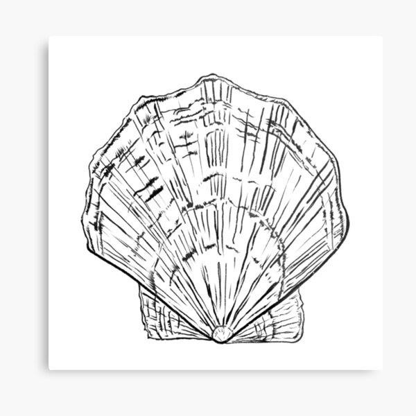 Seashell - black and white  Metal Print