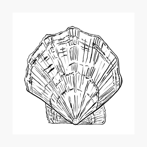 Seashell - black and white  Photographic Print