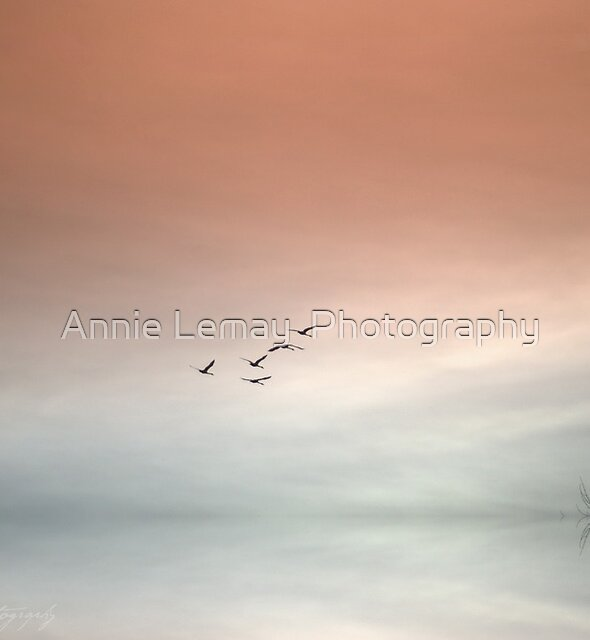 Flight of the Swans by Annie Lemay  Photography