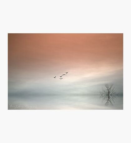 Flight of the Swans Photographic Print