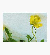 Impression of yellow flower Photographic Print