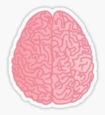 Human Anatomy - Brain Sticker