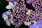 An Ant on Hydrangea  by Tori Snow