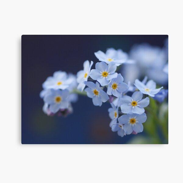 softes of blue Leinwanddruck