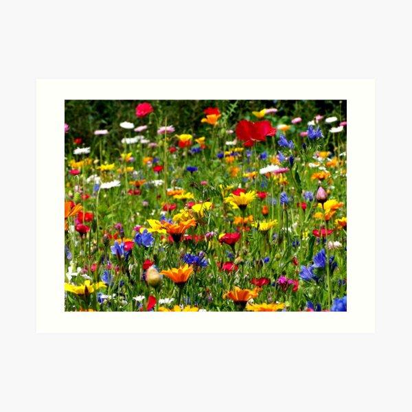 wildflowers Kunstdruck