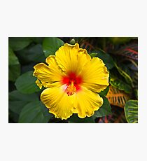 Flower in bloom Photographic Print