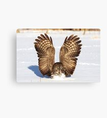 Caught - Great Grey Owl Canvas Print