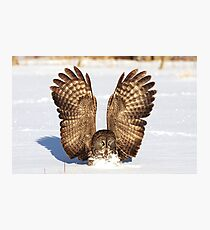 Caught - Great Grey Owl Photographic Print