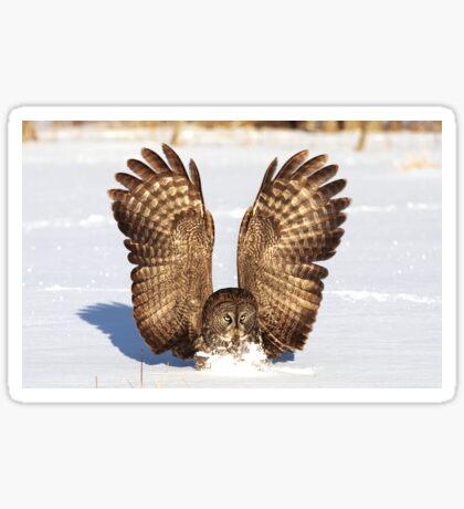 Caught - Great Grey Owl Sticker