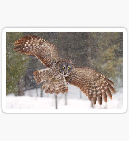 Awesome! - Great Grey Owl Sticker