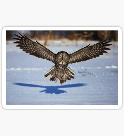 In your face - Great Grey Owl Sticker
