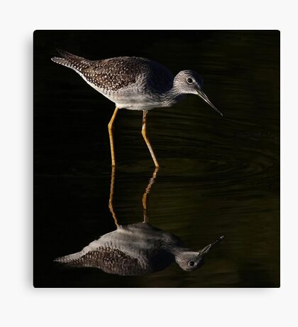 Greater Yellowlegs Reflects Canvas Print