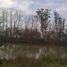 Trees in the water... by ShootingSardar