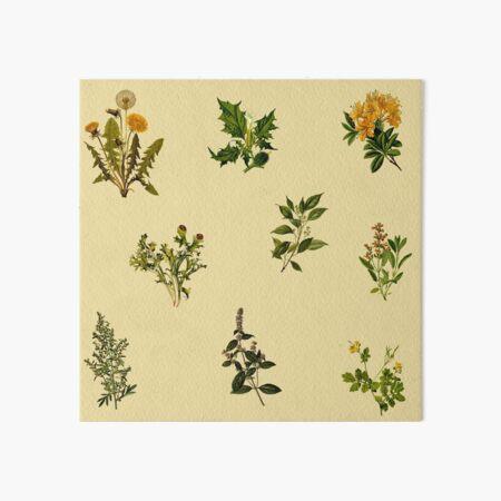 Vintage botanische Packung Galeriedruck