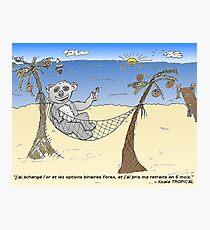 news options binaires en bd un trader ourse koala Photographic Print