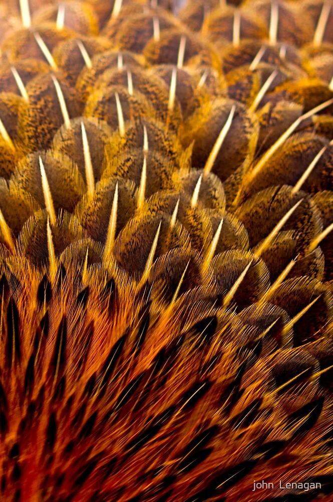 Feather macro study 2 by john  Lenagan