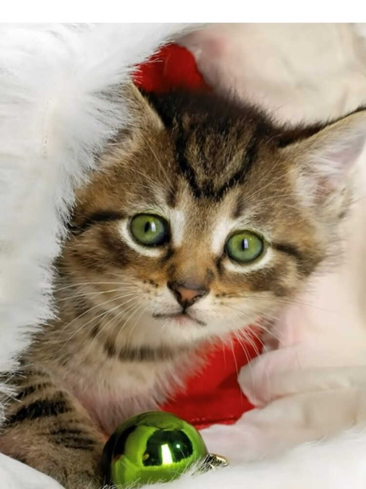 Christmas Cat by alim0355