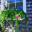 Windowbox in Provincetown by peterrobinsonjr
