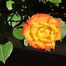 Hot yellow rose by bubblehex08