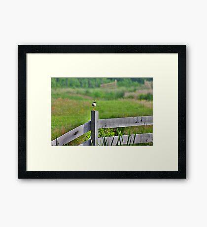 Redshank Fence Framed Print