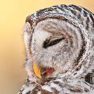 Nodding Off.. by Daniel  Parent