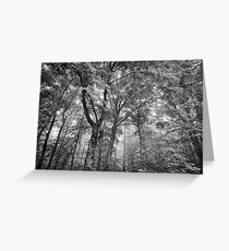 Seeing the trees for the forest Greeting Card