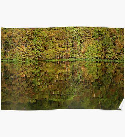 Pieman River reflections  Poster