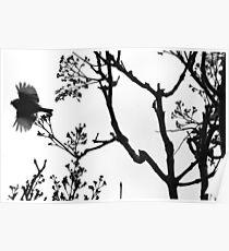 Birdie please don't go! 0656 Poster