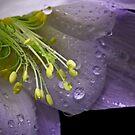 Today's Rain by EbyArts