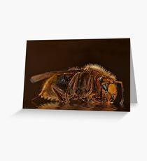 Reflexion d'un hornet Greeting Card
