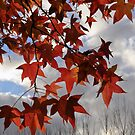 The transition of Autumn and Winter by Robyn Selem