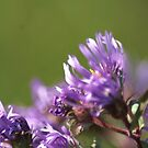 Purple Wild Flowers by Lorelle Gromus